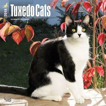 Cats Tuxedo Wall Calendar, Cat Breeds by BrownTrout