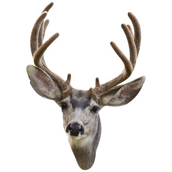 Fuzzy Antler Deer Mount Wall Decal