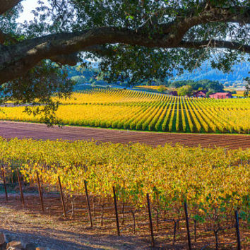 California Nature Print, Napa Valley Photo, Wine Country, Wine Valley Canvas, Vineyard Photo, Gallery Wrap, Winery, Large Wall Decor