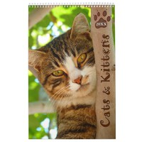 Pawsitively Cats and Kittens 2018 Calendar
