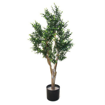 41 inch Julian Ixora Chinese Tree
