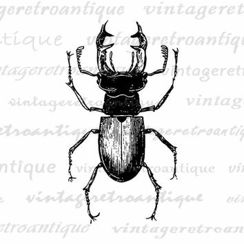 Printable Digital Stag Beetle Graphic Insect Bug Download Image Vintage Clip Art Jpg Png Eps  HQ 300dpi No.3263