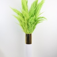 "Dried Pampas Grass in Light Green - 5-6 Stems per Bunch - 30""-42"" Tall"