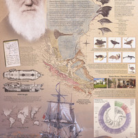 Genius of Charles Darwin Evolution Poster 24x36