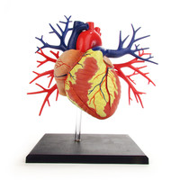Anatomical Snap-Together Kit, Heart, Deluxe