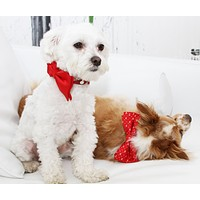 Red dog Bow tie collar, Cute, Puppy Gift, Dog Lovers, pet wedding