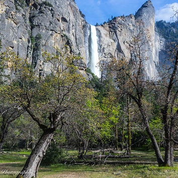 Yosemite Waterfall Wall Art Print -- Fine Art landscape photography, Trees, California, Forest, Home Decor, HeatherRobersonPhoto