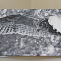 Owl Canvas Photo Nature and Wildlife Photo Canvas 10x20 Black and White Canvas