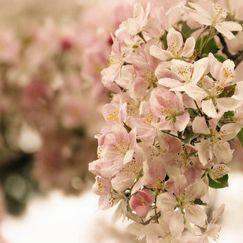Apple Blossoms Floral Photography by VanillaExtinction on Etsy