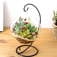 Plant Flower Container
