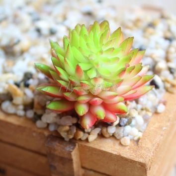 Five kinds of color Plant Garden Succulent Grass Desert Artificial Plants Landscape Arrangement Garden Decor Cute Decoration