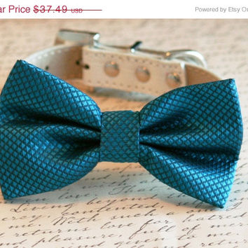 Royal Blue bow tie attached to leather dog collar, Chic Dog Bow tie, Pet Wedding Accessories, 2015 Wedding Accessories