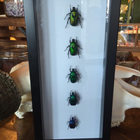 Gradient Green Beetle Collection