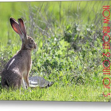The Tortoise And The Hare How About Two Out Of Three 40d12379 Metal Print