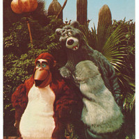 Florida vintage postcard | Disney World | Baloo | King Louie | Jungle Book | Adventureland | Orlando | 1970s retro
