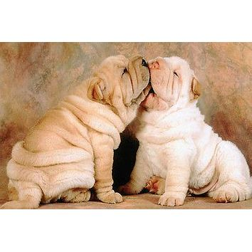TOO CUTE SHAR-PEI PUPPIES KISSING poster skin folds paws wrinkly faces 24X36