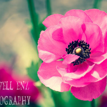 Keeping Secrets 5x7 Fine Art Print Hot Pink Flower Poppy Photography Floral Home Decor Pink Wall Art Nature Photography Gardens