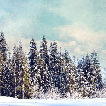 Winter photograph, landscape,Washington,trees,snow,cold,white, nature, travel, aqua,evergreens,mountains