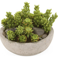 "5"" Succulents in Bowl"