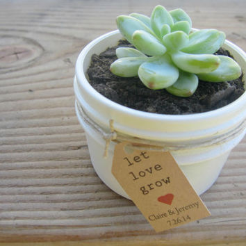 Succulent Favors in 4 oz Jam Jars with Twine White or Ivory with Let love grow tags
