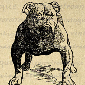 Dog Antique Graphic Digital Printable Download Image Jpg Png Eps  HQ 300dpi No.280