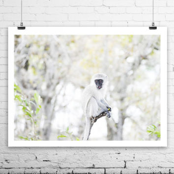 Monkey, Wildlife photography from South Africa
