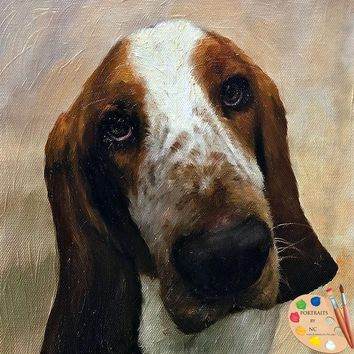 Basset Hound Dog Portrait 538