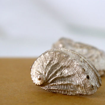 Sea Shell Stud Earrings Nautical Sterling Silver