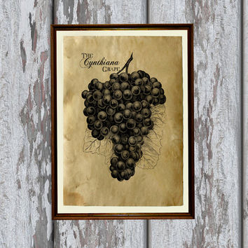 Grapes art print Old paper Antiqued decoration vintage looking 8.3 x 11.7 inches