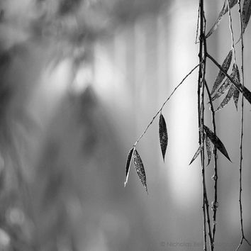 black and white photography, minimalist, silver, nature, landscape, BRIDGE AND WILLOW, 8 x 8 print