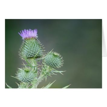 Blank Inside, Pink/Purple Thistle Wildflower Card