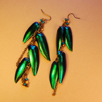 Jewelry Elytra Emerald Green Iridescent  Beetle Wing TOHO Beads Brass Chain Earrings