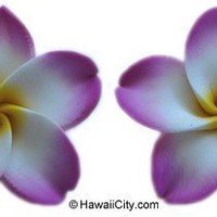 """Hawaiian Poly Clay Pink and White Flower Earrings - 1/2 """""""