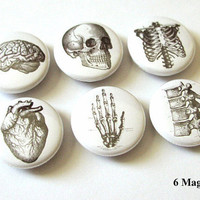 6 Anatomy MAGNETS Set 1 inch brain skull hand anatomical heart ribs vertebrae