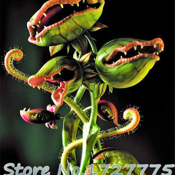 New Arrival Home Garden 20 Seeds Venus Fly Trap Dionaea Muscipula Carnivorous Plant Seeds Free Shipping