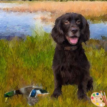 American Water Spaniel Dog Portrait 523