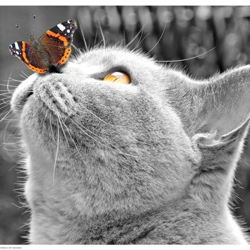 Butterfly on Nose Art Print