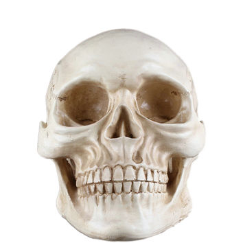 Halloween Child Human Skull Replica Scary Horrible Halloween Decoration with Base - Beige
