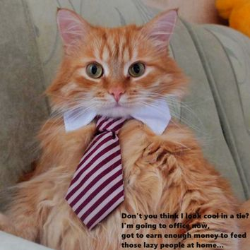 Cat Collar Tie