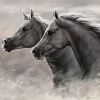 Two Horses Wall Poster 16x24
