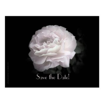 Save the Date 55th Birthday Party Pale Pink Rose Postcard