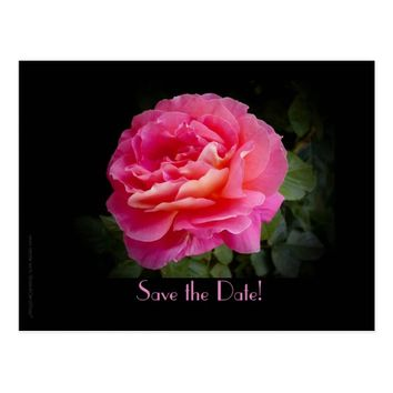Save the Date 10th Anniversary Party Pink Rose Postcard