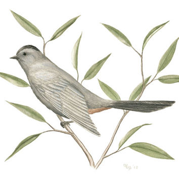 "Bird Art Giclee Print - Fine Art Reproduction of Original Gray Catbird Illustration, Grey Bird on Branch Art 8.5"" X 11"""