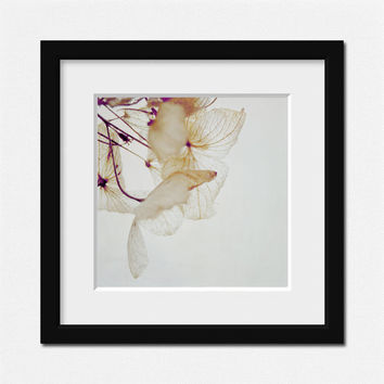 The fine lacy dried Hydrangea flowers, Minimal Nature Wall Art  - Fine Art Photography