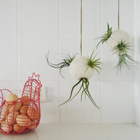 Air Plant Hanging Planter. Air Plant Bubble made with Llama Fibre