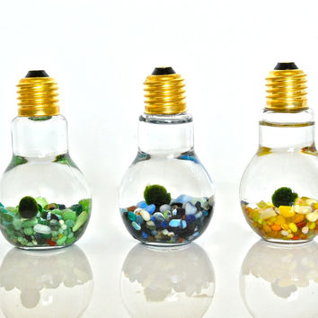 A Set of 3 Colorful Marimo Ball Light Bulb Aquariums - Moss Balls in Light Bulb Glass Vases, Set of Three Moss Terrariums, Unique Gift Ideas