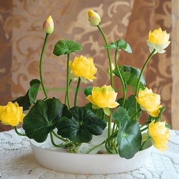10 pcs/pack Bonsai Bowl Lotus Seed Hydroponic Plants Aquatic Plants Flower Seeds Pot Water Lily Seeds for Home Garden