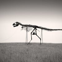 "Dinosaur Skeleton Photo Print Black and White Unique Bizarre Humor Rex Sculpture 12 x 18 Fine Art ""Man's Best Friend"""