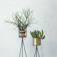 Plant Stand - Small / H 50 cm