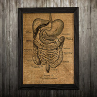 Biology print Intestines art Anatomy poster Medical print BLP737
